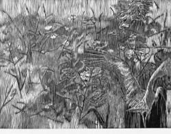 Li Kang 05锛氭潖鑺辩枏褰甭锋竻鏄_ 灏哄锛_0x60cm 鐗堢锛氶粦鐧芥湪鍒_ 骞翠唬锛_012
